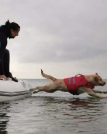 Perros de rescate acuático: